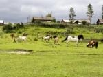 Dorf an der Nuja
